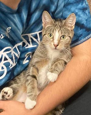 Skinny Jean is an approximately one year old petite girl and super sweet She enjoys keeping your la