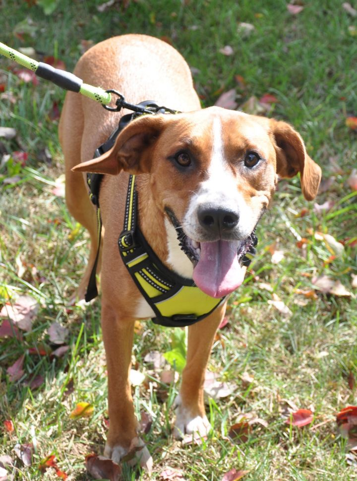Candi-Available! www.lhar.dog to apply! 1