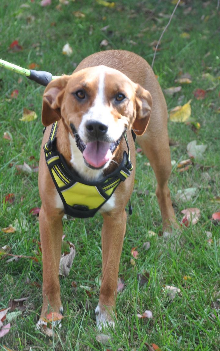 Candi-Available! www.lhar.dog to apply! 2