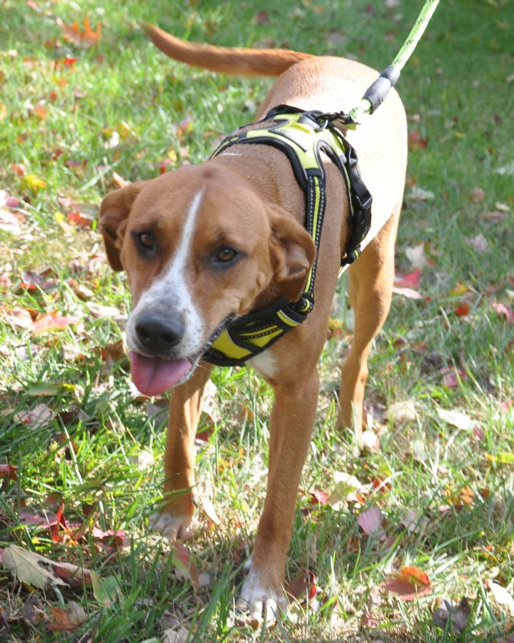 Candi-Available! www.lhar.dog to apply! 4