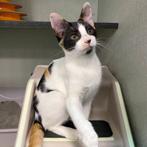 Purrfection Meet Tally a very special 6-month-old found outside and alone This delightful girl is