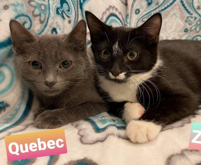 Quebec and Zulu