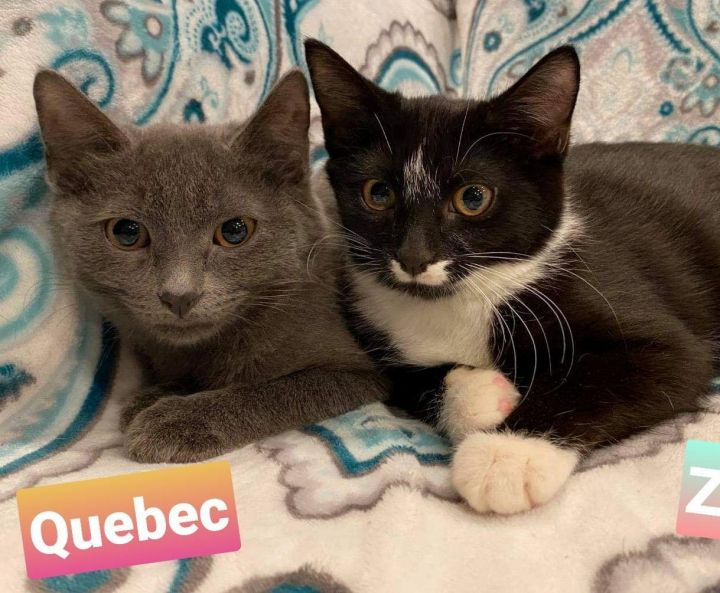 Quebec and Zulu 1