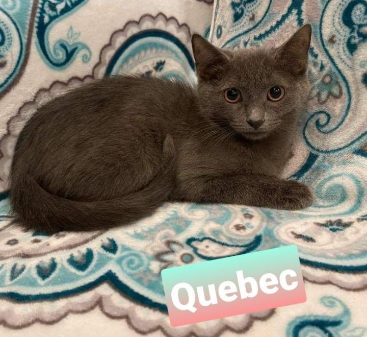 Quebec and Zulu 2