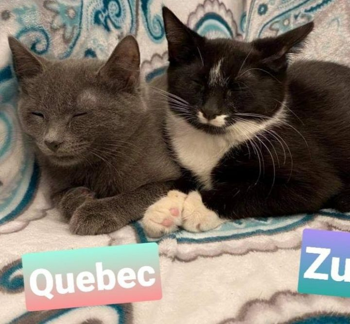 Quebec and Zulu 3