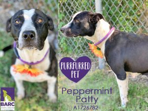 Peppermint Patty or Pep for short is an energetic girl who LOVES attention This staff-favorite i