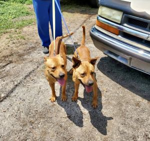 Yabba-dabba-do this duo is for you Meet Betty  Barney a precious mother  son bonded pair of on