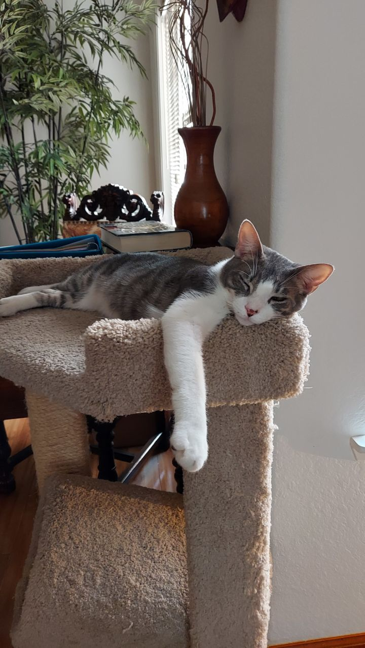 Uncle Louie 3