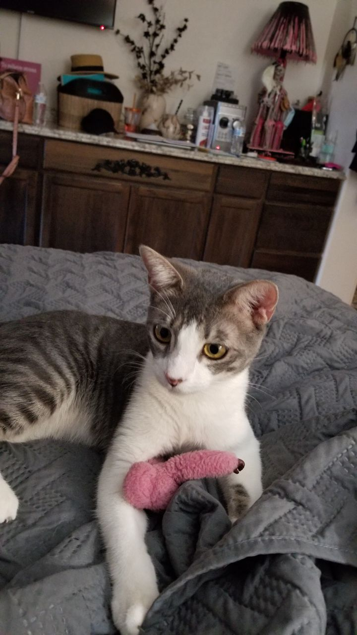 Uncle Louie 4