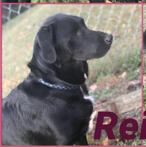 Reilly 3