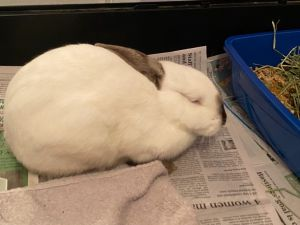 Max and two other bunnies were dumped in a park in a box and fortunately brought