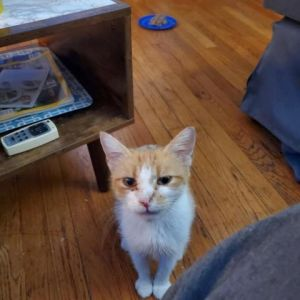 Meet Mattie Shes a small little kitten whod fit seamlessly into any home She likes to find a com