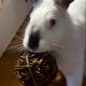 Cilantro was found in a local park in a box with two other bunnies She is a sweet girl and