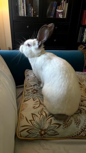 Parsleywas rescued from a local park where she was found in a box with two other rabbits She has a