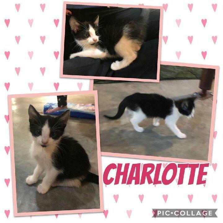 Charlotte 1