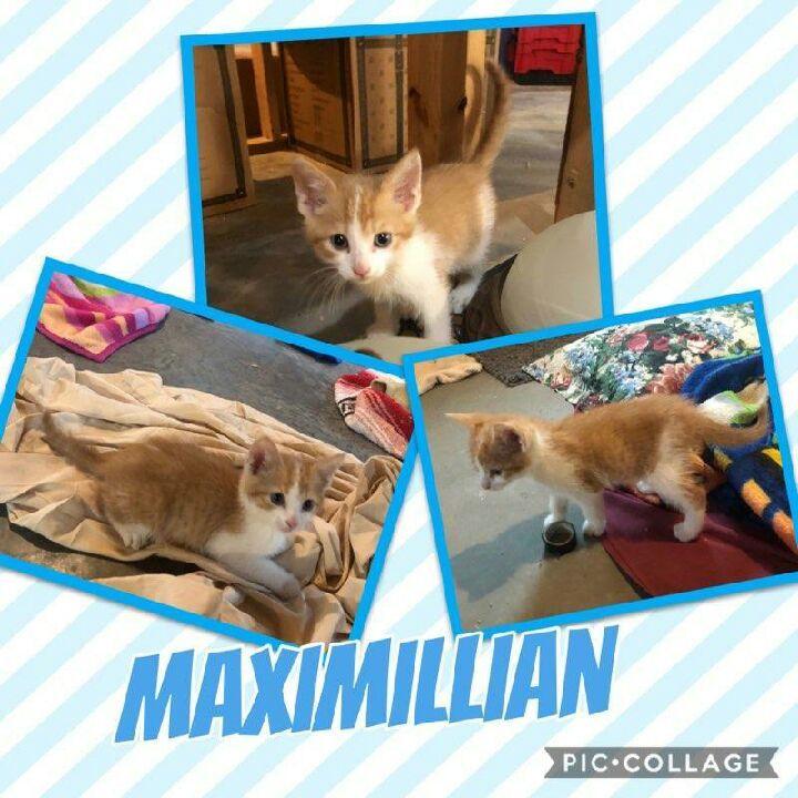 Fritz and Maximillian 2