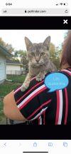 Nala (lap cat)