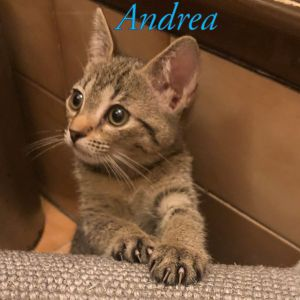 Meet Anas beautiful Kittens  Annie  Anita Andrea  and Angelito  Born in the beginning of Septe