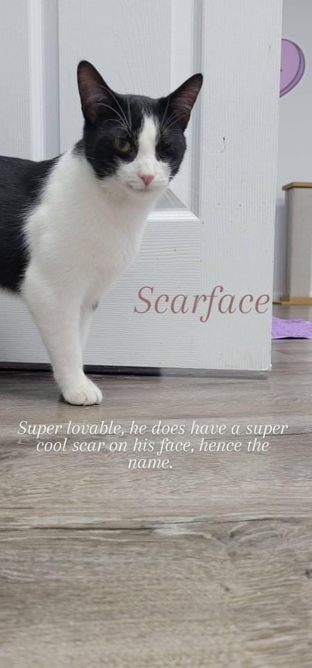 Scarface A-2510 6