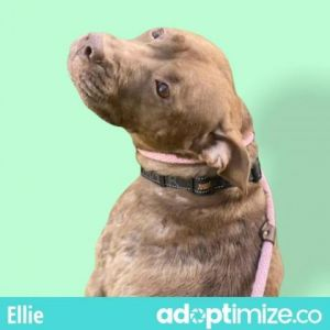 Ellie is a lovebug She rubs against your legs and looks up at you with a sweet doggy smile while
