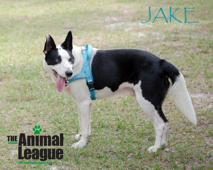 Jake 3