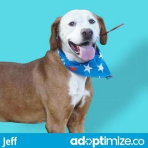 My name is Jeff Im as sweet as they come I love receiving attention from people especially scrat