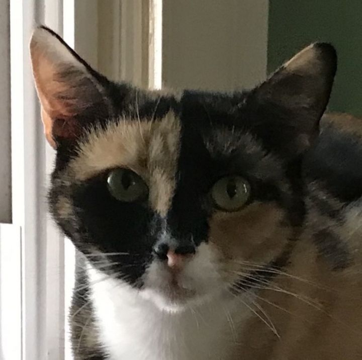 Callie 1