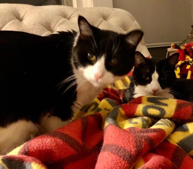 Mama Minnie & Tea Cup (Bonded Pair) - Pending Adoption 3