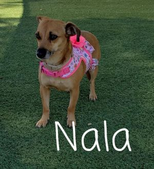 Experienced owner only that has worked with fearful dogs Shy 5 yer old Female approx 14lbs came i