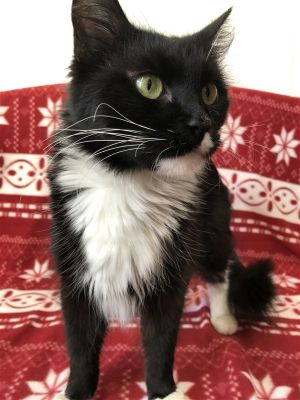 Meet Hera This sweet loving gal loves cuddles and being cradled like a baby She has a very raspy
