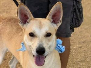 Bumblebee is a sweet young dog who is looking for a family of his own Bumblebee would like a patien