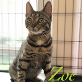 Zoe is under a year old and has the sweetest little personality  She just wants to be in your