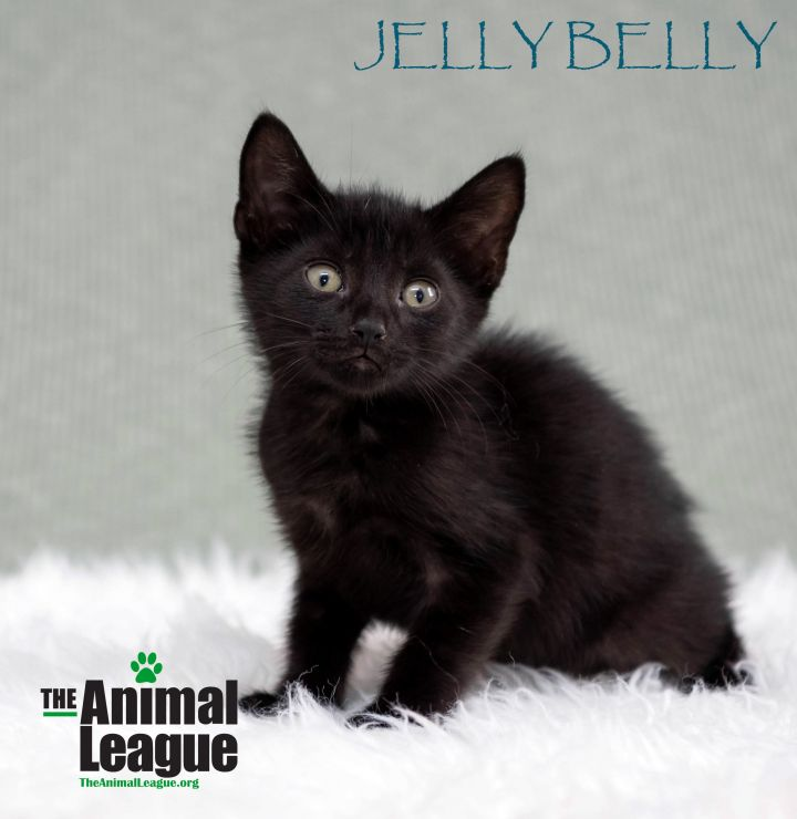Jelly Belly 1