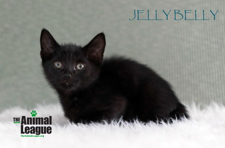Jelly Belly 2