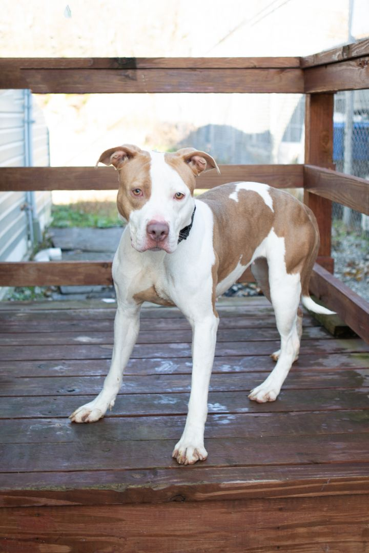 Lola, an adoptable Mixed Breed in Cape Girardeau, MO