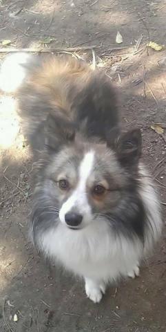 Chloe-Adoption Pending!