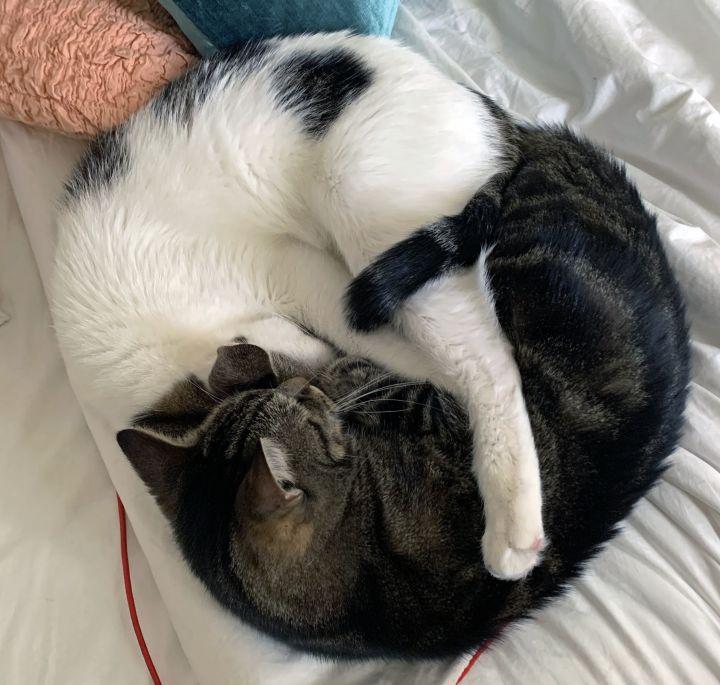 Sebastian & Louie 5