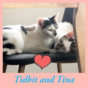 This beautiful young brother and sister duo cant wait to purr their way into your home Fostered wi
