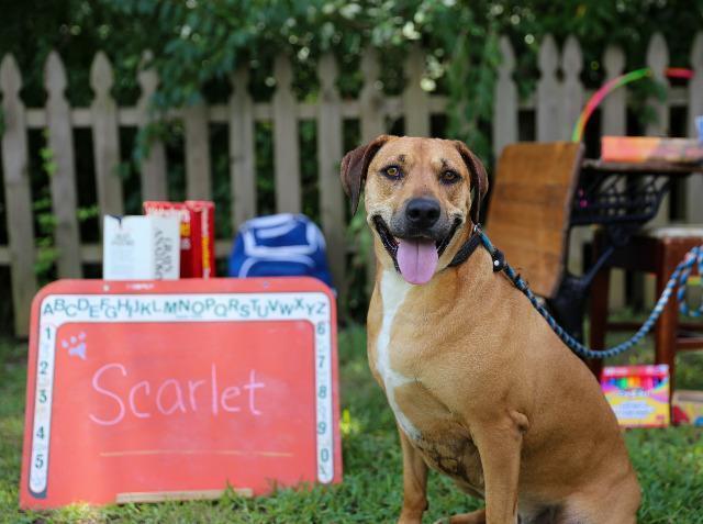 Scarlet 4