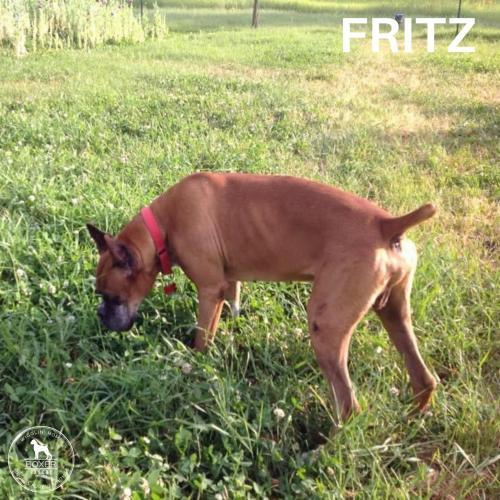 Fritz 3
