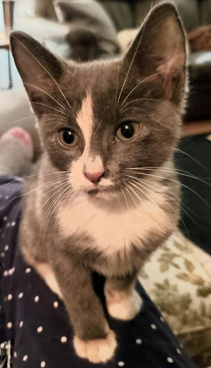 Norma Jean - Not Currently Accepting New Applications (Waitlist Only) 1