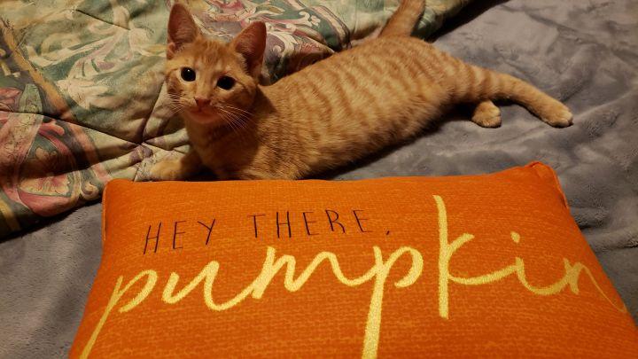 Pumpkin & Noche (Bonded Pair) - Pending Adoption 5