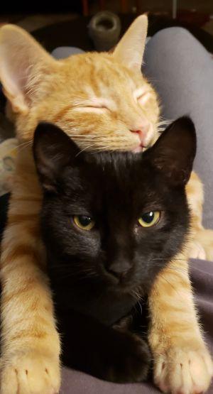 Pumpkin & Noche (Bonded Pair) - Pending Adoption