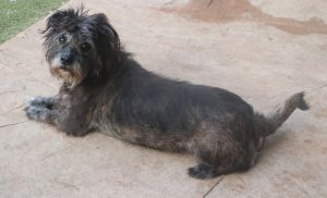 this adorable little girl is approx 5 yrs old and 23 lbs she is a sweet little dog she loves