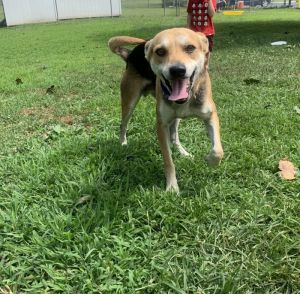 Michael Beagle Dog