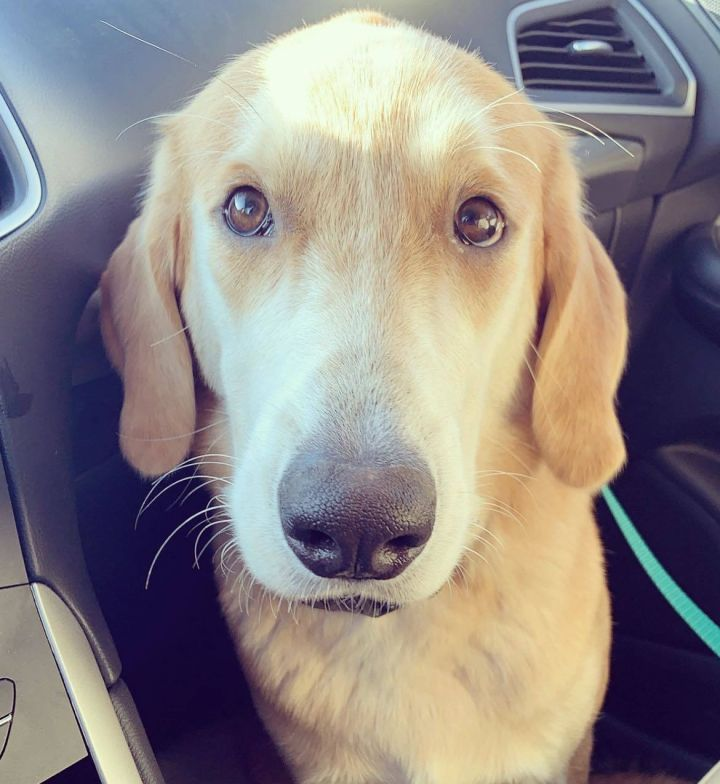 Milo-adoption pending 1