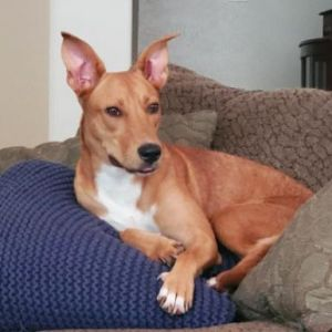 Fawn didnt have the best start to life Were not sure what she has seen in her short year and