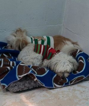 Delores and Delilah are a bonded pair who will only be adopted together Delores is 7 years old and