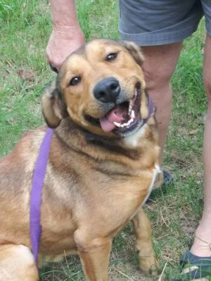 Georgia available 11/20/2020 Mixed Breed Dog