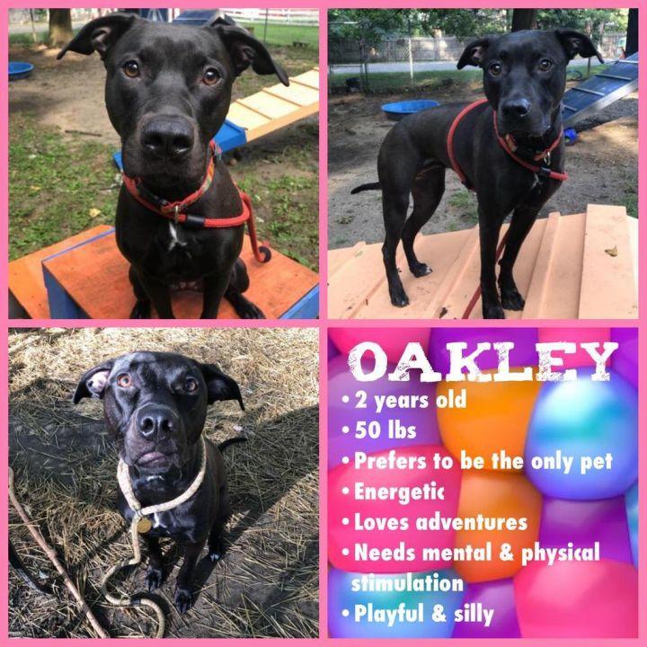 Oakley 5